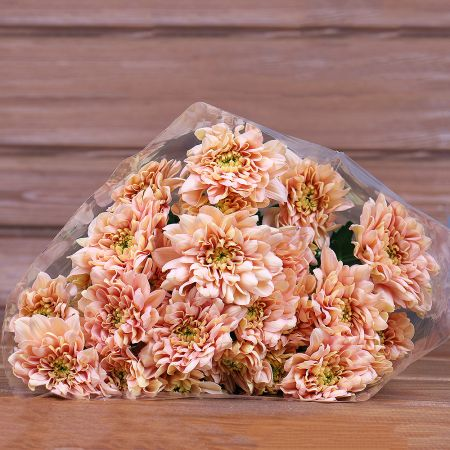 Product Wholesale Chrysanthemum Baltica Salmon
