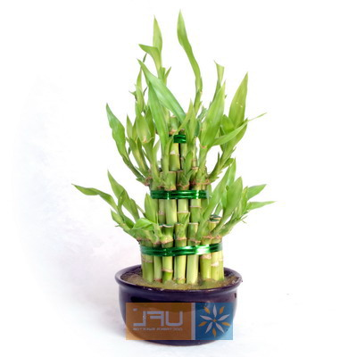 Bouquet Bamboo