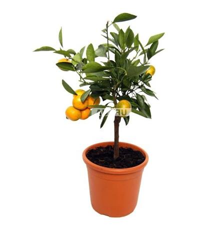 Product Orange