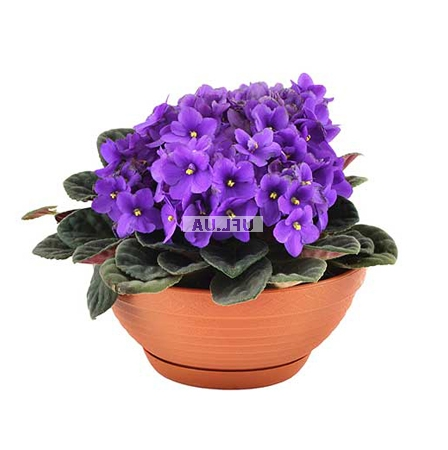 Product Violet