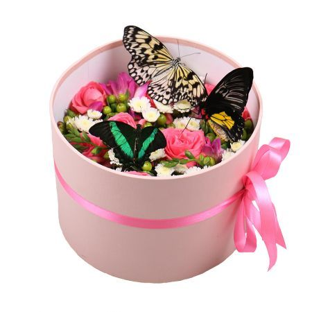 Box with butterflies | order now on UFL