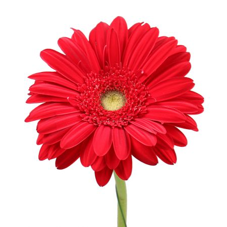 Bouquet Red gerbera by the piece