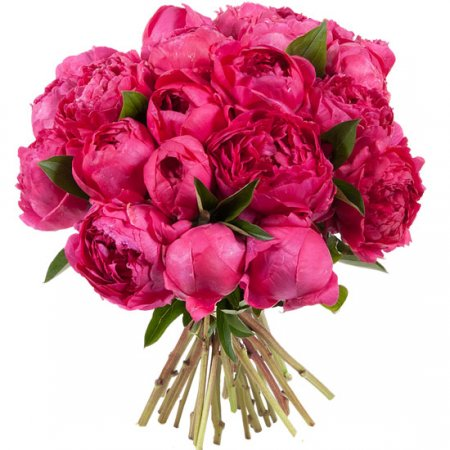 Bouquet Crimson peonies