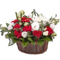 Bouquet Quiet dawns