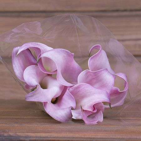 Product Wholesale Calla Samur