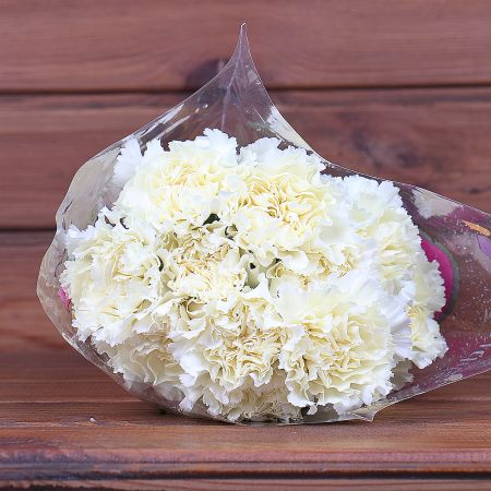 Product Whosale Carnation Diletta Crema