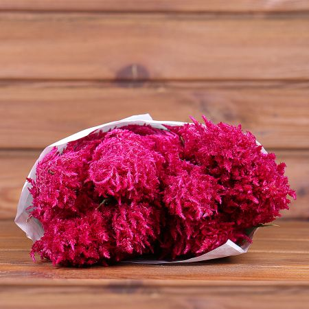 Product Whosale Celosia Purple Rose