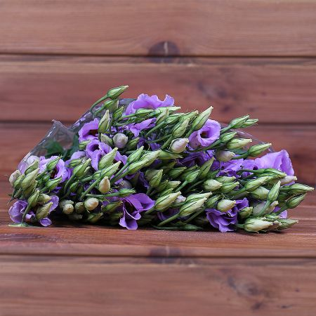 Product Whosale Eustoma Piccolo Lavender