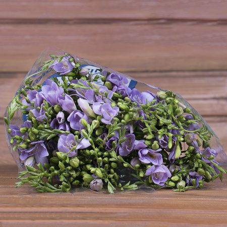 Product Wholesale Freesia Blue Moon
