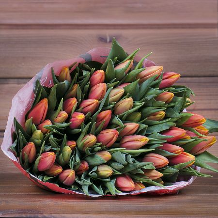 Product Wholesale Tulips Hennie vander Most