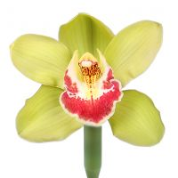 Bouquet Orchid lime piece