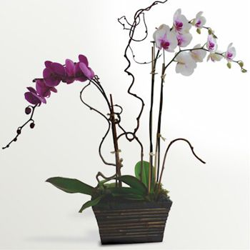 Bouquet Orchid Arrangement