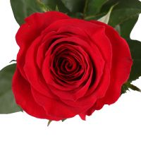 Product Red roses premium by the piece 80 cm