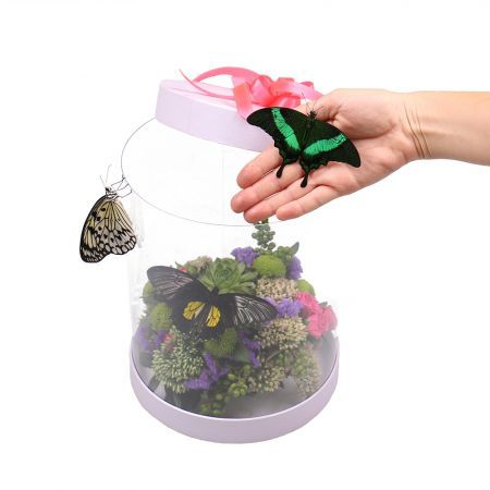 Transparent box with butterflies | order with delivery on UFL