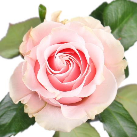 Bouquet Rose Pink Mondial by piece