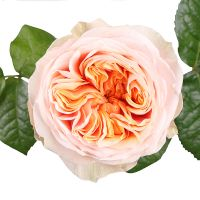 Bouquet Rose Vuvuzela by the piece