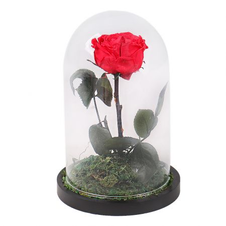 Product Stabilized Red Rose in a Flask