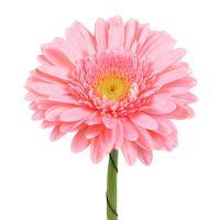 Bouquet Light pink gerberas by the piece